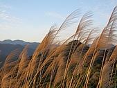 文筆山(365m)、五城山(H419m):IMG_1093.jpg