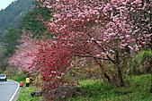 2011.2.13武陵櫻花饗宴:照片 083.jpg