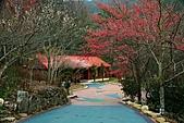 2011.2.13武陵櫻花饗宴:照片 037.jpg