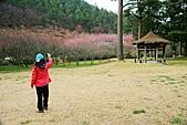 2月13日遊武陵賞櫻花:照片 054.jpg