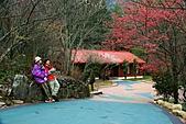 2月13日遊武陵賞櫻花:照片 035.jpg