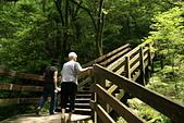 拉拉山神木群步道:高齡93