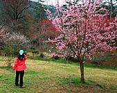 2011.2.13武陵櫻花饗宴:照片 058a.jpg