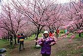 武陵櫻花宴:照片 004.jpg