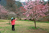 2月13日遊武陵賞櫻花:照片 057.jpg