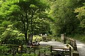 拉拉山神木群步道: