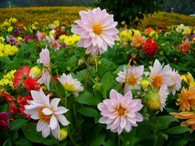 các loài hoa đẹp 3
