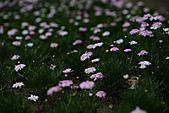 0331百微鏡植物園賞花:DSC09547-1.jpg