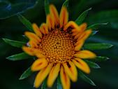 0331百微鏡植物園賞花:DSC09514-1.jpg