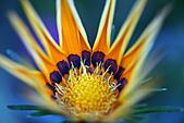0331百微鏡植物園賞花:DSC09489-1.jpg