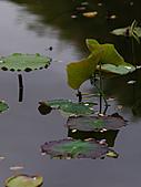 四月四日清晨的植物園:DSC00114-1.jpg