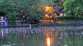 四月四日清晨的植物園:DSC00071-1.jpg