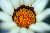 0331百微鏡植物園賞花:DSC09517-1.jpg