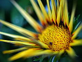 0331百微鏡植物園賞花:DSC09492-1.jpg