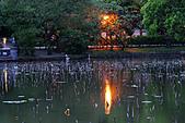 四月四日清晨的植物園:DSC00072-1.jpg