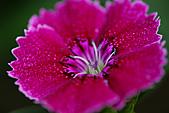 0331百微鏡植物園賞花:DSC09536-1.jpg
