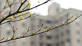 路邊小公園小品:DSC00294-1.jpg