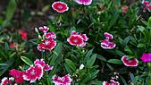 0331百微鏡植物園賞花:DSC09499-1.jpg