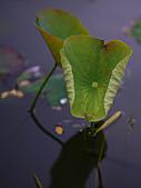 四月四日清晨的植物園:DSC00078-1.jpg