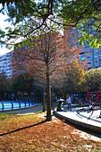 永和四號公園(823紀念公園):DSC1076-1.jpg