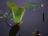 四月四日清晨的植物園:DSC00079-1.jpg