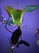 四月四日清晨的植物園:DSC00082-1.jpg