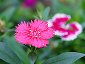 0331百微鏡植物園賞花:DSC09501-1.jpg