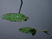 四月四日清晨的植物園:DSC00091-1.jpg