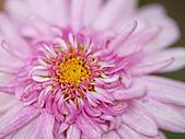 0331百微鏡植物園賞花:DSC09539-1.jpg