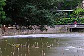 四月四日清晨的植物園:DSC00094-1.jpg