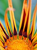 0331百微鏡植物園賞花:DSC09503-1.jpg