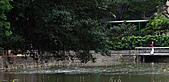四月四日清晨的植物園:DSC00095-1.jpg