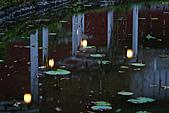四月四日清晨的植物園:DSC00097-1.jpg