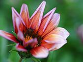 0331百微鏡植物園賞花:DSC09504-1.jpg
