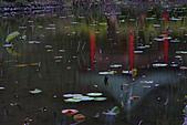 四月四日清晨的植物園:DSC00100-1.jpg