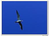 25901088大溪漁港-海鷗:DSC09857-2.jpg