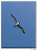 25901088大溪漁港-海鷗:DSC09686-1.jpg