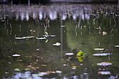 四月四日清晨的植物園:DSC00103-1.jpg