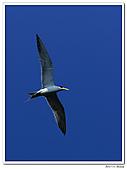 25901088大溪漁港-海鷗:DSC09857-1.jpg