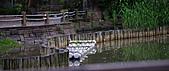 四月四日清晨的植物園:DSC00107-1.jpg