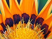 0331百微鏡植物園賞花:DSC09510-1.jpg