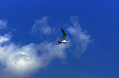 25901088大溪漁港-海鷗:DSC09887-1.jpg