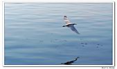 25901088大溪漁港-海鷗:DSC09480-1.jpg