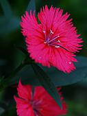 0331百微鏡植物園賞花:DSC09511-1.jpg