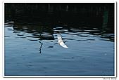 25901088大溪漁港-海鷗:DSC09481-1.jpg