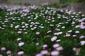 0331百微鏡植物園賞花:DSC09546-1.jpg