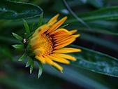 0331百微鏡植物園賞花:DSC09512-1.jpg