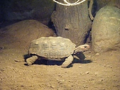 木柵動物園:DSCF8163.JPG