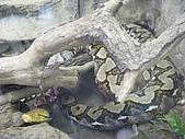 木柵動物園:DSCF8164.JPG