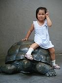 木柵動物園:DSCF8166.JPG